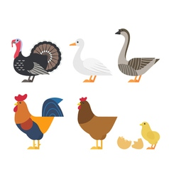 set of Colorful farm bird icons vector image