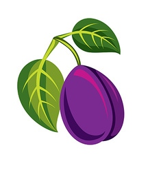 Single purple simple plum with green leaves ripe vector