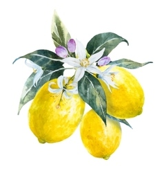 Watercolor lemons with flowers vector