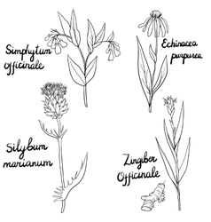 Set of medical plants vector