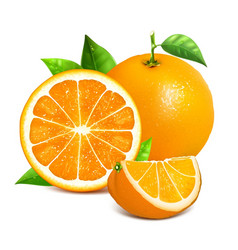 Orange whole and slices vector