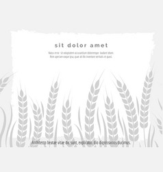 horizontal agriculture poster with wheat branches vector image