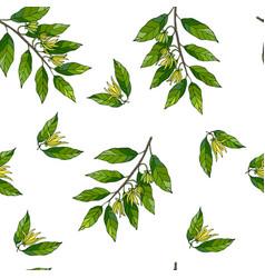 Seamless pattern with hand drawn ylang ylang vector
