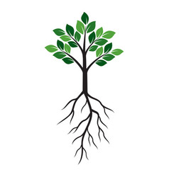shape of green tree and roots vector image