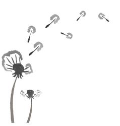 Watercolor dandelions Abstract flower background vector image