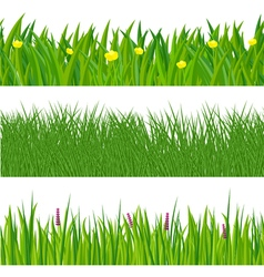 Green spring grass vector