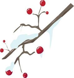 Winter berries vector