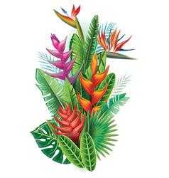 Arrangement from tropical plants vector