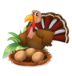 A turkey beside the nest with eggs vector image