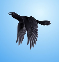 Black raven on blue background vector
