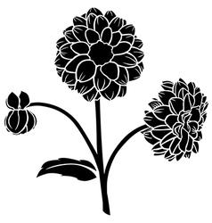 Dahlia flower vector