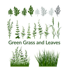 grass flowers and leaves vector image