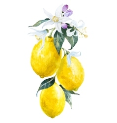 Watercolor lemons with flowers vector image