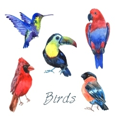 Exotic tropical birds watercolor icons set vector