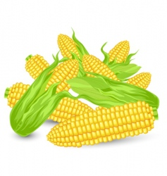 Hill ears of ripe corn vector