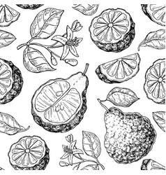 Bergamot seamless pattern drawing isolated vector