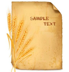 wheat paper vector image