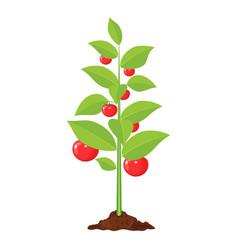 Decorative vegetable tree vector