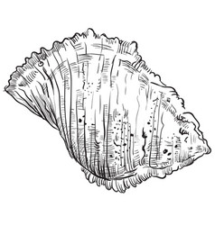 Hand drawing seashell-18 vector