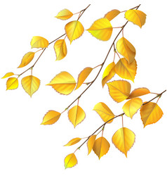 Yellow birch leaves vector image vector image