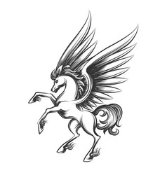 Winged horse engraving vector