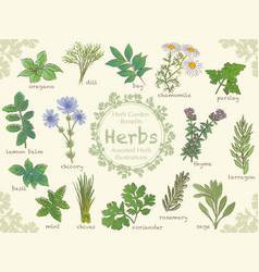 herbs 1 vector image vector image