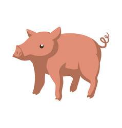 pig farm animal vector image