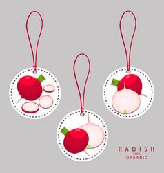 The radish vector