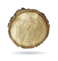 Wood object isolate on white vector image vector image