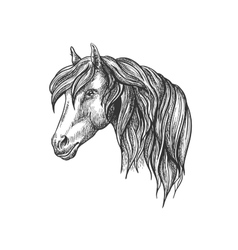 Calm looking horse head sketch with curly mane vector
