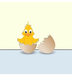 Chick and broken egg vector