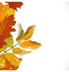 Realistic red yellow and green autumn leaves vector image