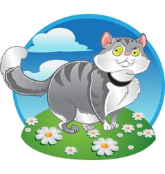 Grey fat cat on the color background vector image vector image