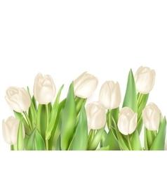 Tulips decorative background EPS 10 vector image