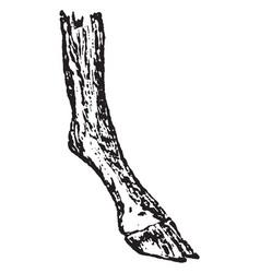 Compressed foot vintage vector