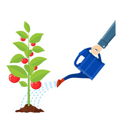 Hand watering money fruit tree with can vector