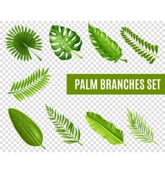 Palm Tree Branches Set vector image vector image