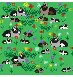 Pattern seamless of guinea pigs and colors vector image