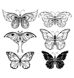 set of art butterflies vector image vector image