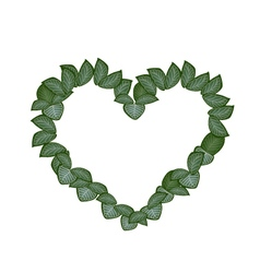 Green nerve leaves in a heart shape vector