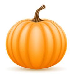 pumpkin stock vector image