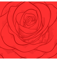 Beautiful background with red rose close-up vector