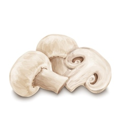 Champignon mushrooms isolated vector image vector image