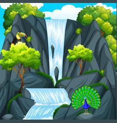 toucan bird at the waterfall vector image