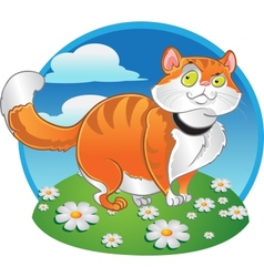 Orange fat cat on the color background vector