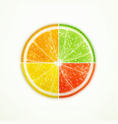 fruit slice vector image