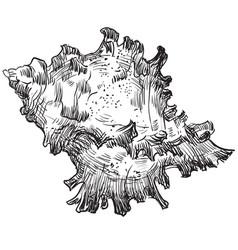 Hand drawing seashell-19 vector