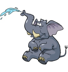 elephant squirting water vector image