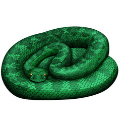Green rattlesnake on white background vector