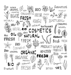 Set of doodle herbs plants and the lettering vector image